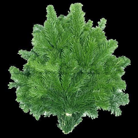 Branches de Sapins NORDMANN pour couronnes et décoration - Petites (10-30cm)