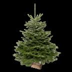Sapin naturel Nordmann 150-175cm avec bûche en bois