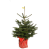 Sapin de Noël naturel NORDMANN en pots - 1M