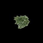 Branches de Sapins NORDMANN pour couronnes et décoration de Noël