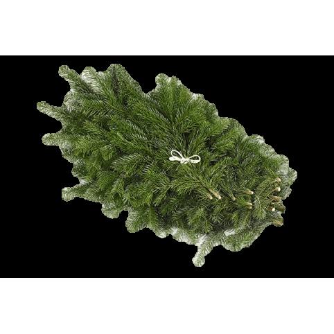 Branches de Sapins NORDMANN pour couronnes et décoration
