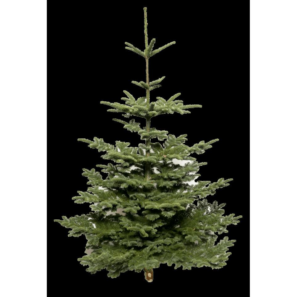 Sapin De Noël Nobilis