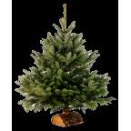 Bûche/Pied de sapin de Noël en bois - Avec Sapin (Livré sans)